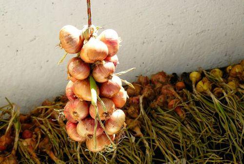 Как хранить репчатый лук-севок — разбираемся в нюансах хранения