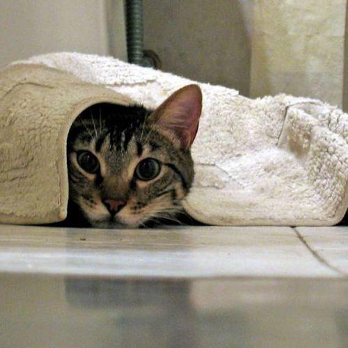 Кот в квартире — рекомендации по избавлению от запахов