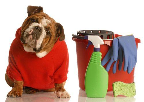 Владельцам собак — как устранить запах псины
