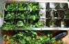 Все способы и методы как долго хранить зелень в домашних условиях