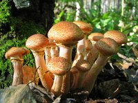 Самые эффективные способы, как хранить разные виды грибов в домашних условиях