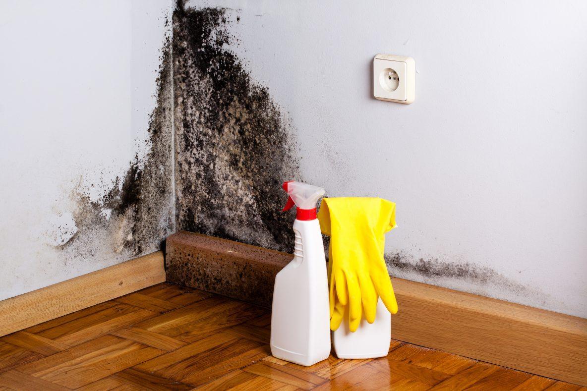 Как убрать грибок в доме