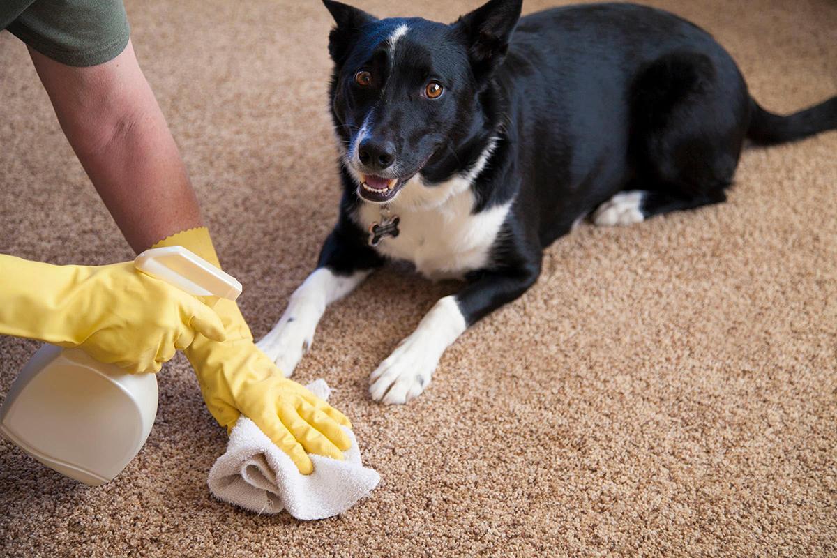 Как убрать запах мочи собаки в квартире