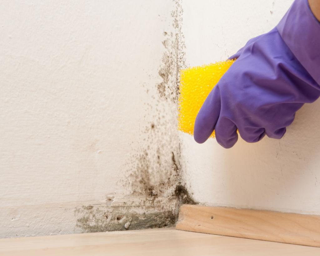 Чем убрать запах сырости в доме