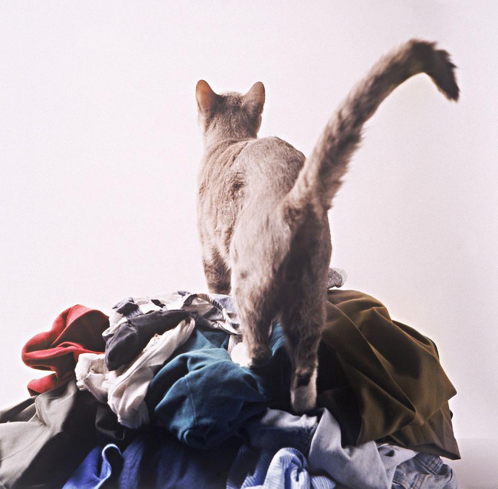 Способы уборки кошачьего запаха в квартире