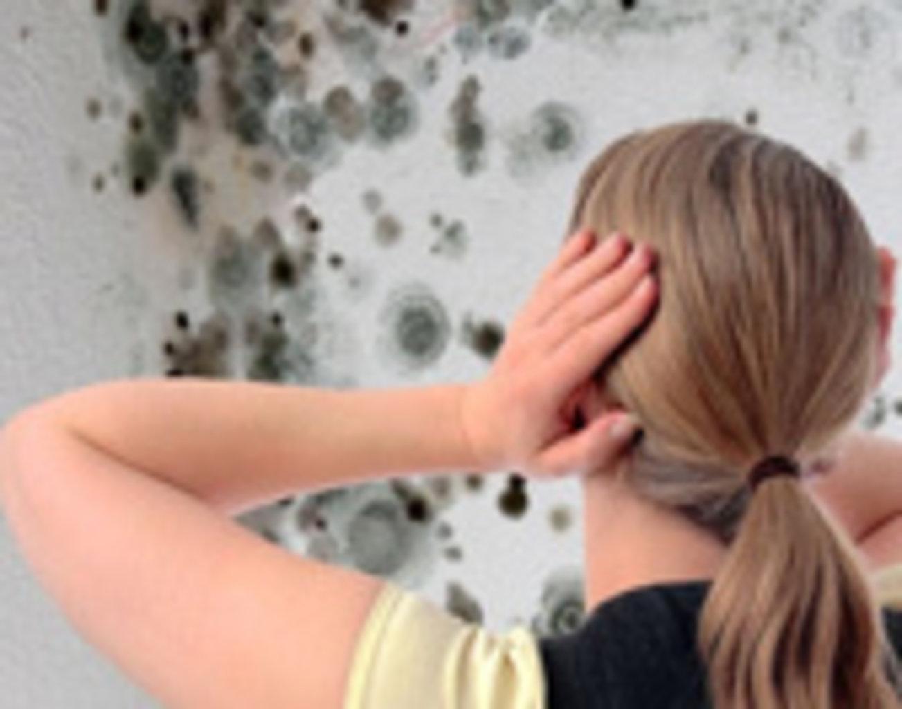 Удаления грибка со стен