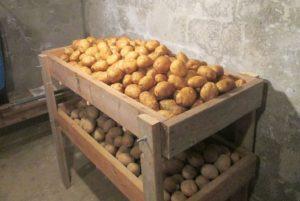 Хранение в погребе картофеля