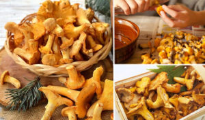 Подготовка грибов к хранению